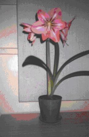 С ранней весны до поздней осени цветут